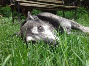 gentle-jinxie-in-the-grass-tim