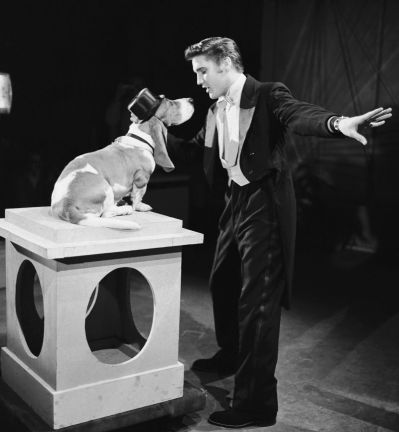 Elvis hound dog
